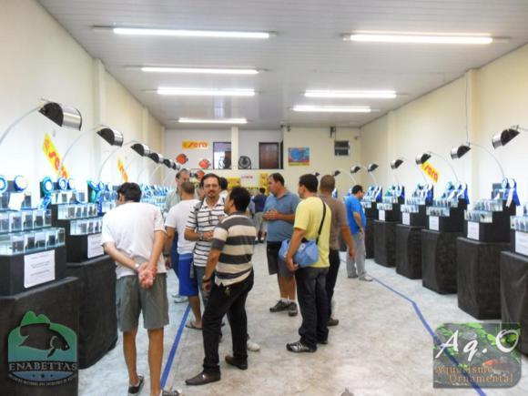 ENABETTAS 2011 - Público, expositores e demais presentes apreciando a exposição de Bettas