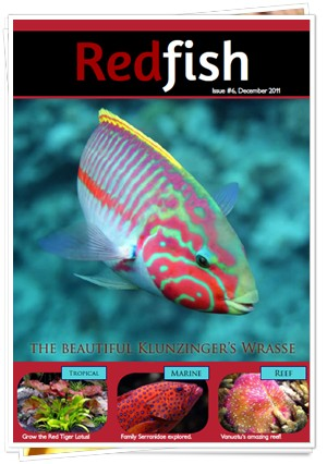 RedFish Magazine 6