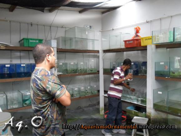 Rodrigo Soares e Wilson Vianna na estufa