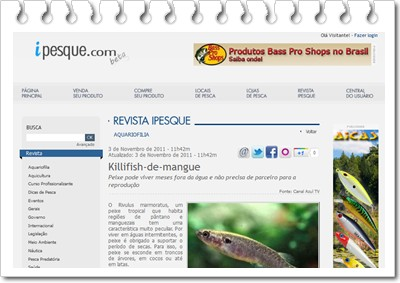 Killifish-de-mangue