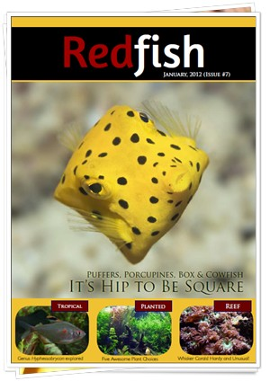 RedFish Magazine 7