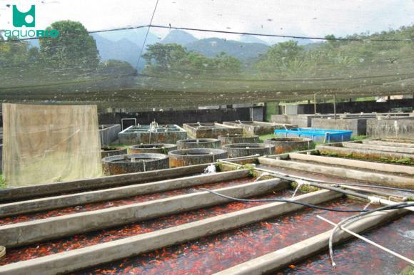 Tanques de crescimento de peixe japonês