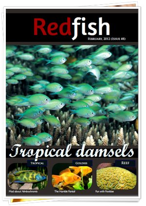 RedFish Magazine 8