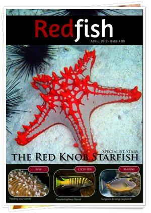 RedFish Magazine 10