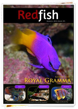 RedFish Magazine 9