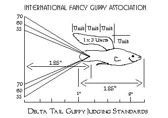 Delta Tail Guppy Judging Standards